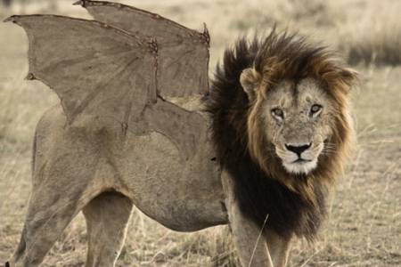 leon alado